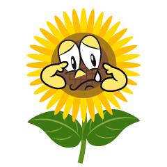 Sobbing Sunflower