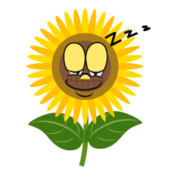 Sleeping Sunflower
