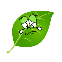 Crying Leaf