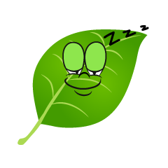 Sleeping Leaf