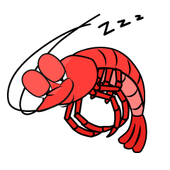 Sleeping Shrimp